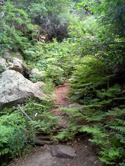 Hiking Fern Canyon Trail